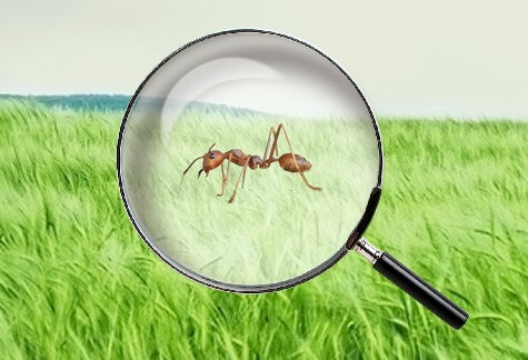 Ant Busters